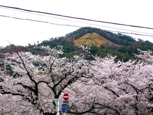 大文字と桜