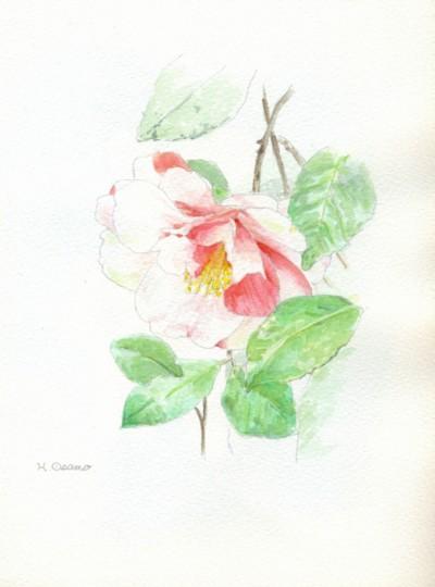 水彩「椿」