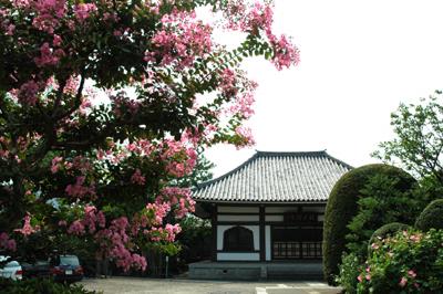 サルスベリ咲く龍光寺