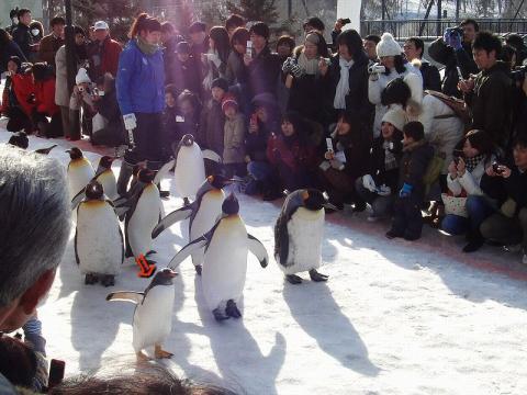 ジェンツーペンギン 1