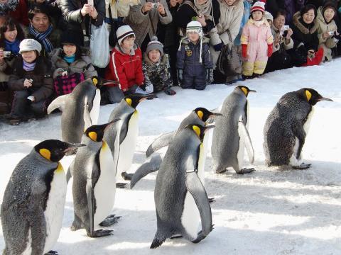 キングペンギン 1