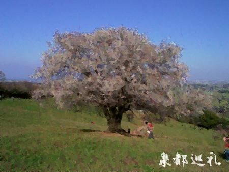 20060402saio1.jpg