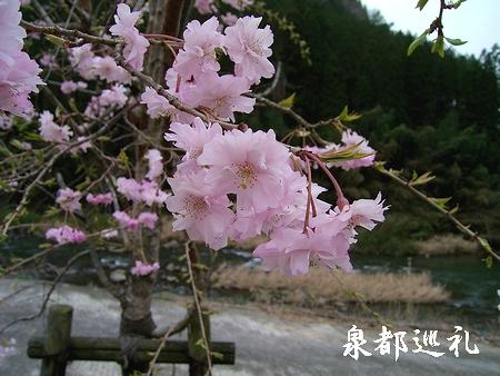 20060409ikenotsuru3.jpg