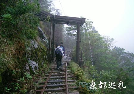20060423joumonsugi1.jpg