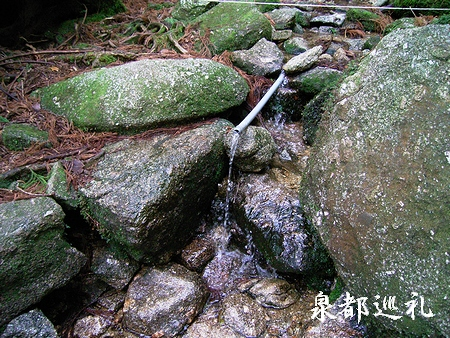 20060423joumonsugi12.jpg