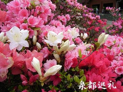20060429shinrinkouen.jpg