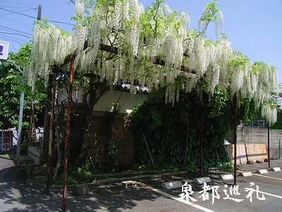 20060503sinmachi2.jpg