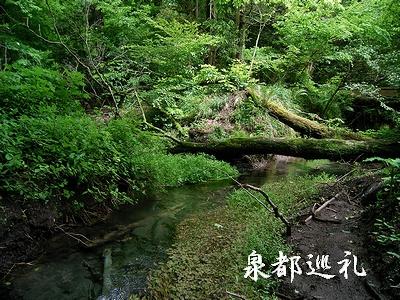 20060520oike2.jpg