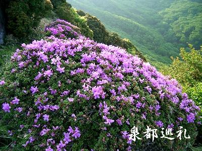 20060603kujyu1.jpg