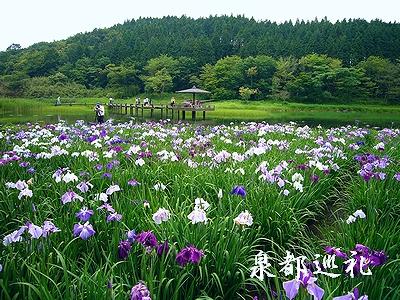 20060624kagurameko1.jpg