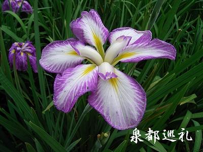 20060624kagurameko2.jpg