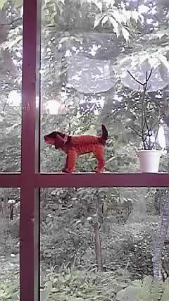 doll dog