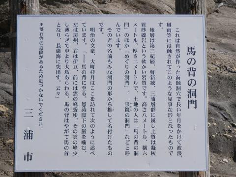 m337.jpg