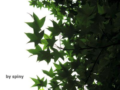 green0612.jpg