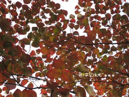 hanamizu10.jpg