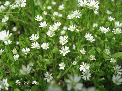 husuma418.jpg