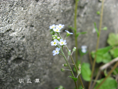 kyu418.jpg