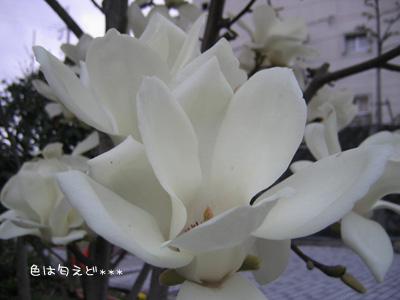 moku0405.jpg
