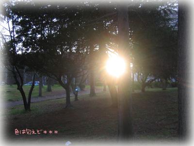 taiyo330.jpg