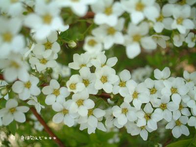 yukiya327.jpg