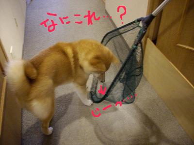 cはな (2)