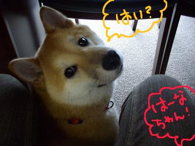 コピー ~ cはな (4)