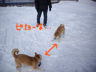 コピー ~ cはな (5)