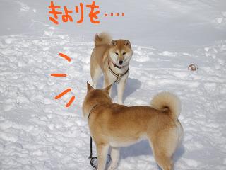 コピー ~ cはな (8)
