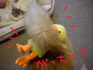 コピー (2) ~ cはな (15)