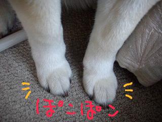 コピー ~ cはな (10)