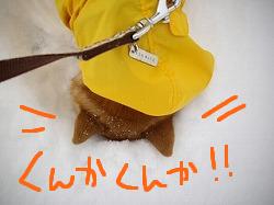 ccはな (11)