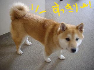 コピー ~ cはな (14)