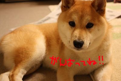 コピー ~ cはな (9)