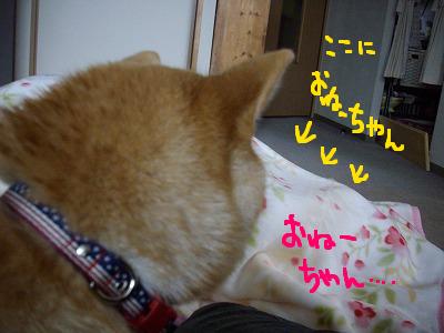 コピー ~ cはな (2)