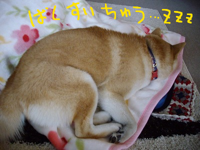 コピー ~ cはな (3)