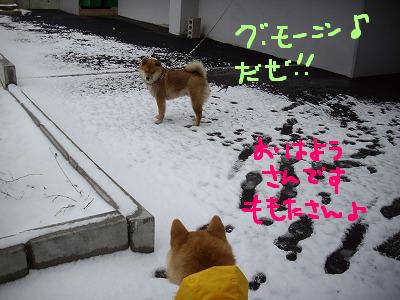 コピー (2) ~ cはな (8)