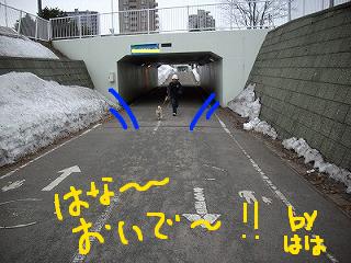 コピー ~ ccはな (3)