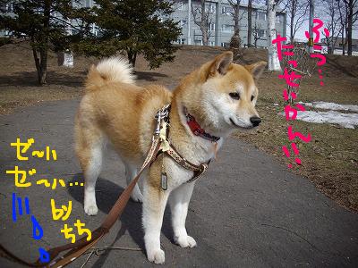 コピー ~ cはな (15)