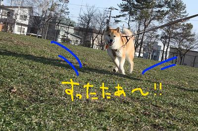 コピー ~ cIMG_5953