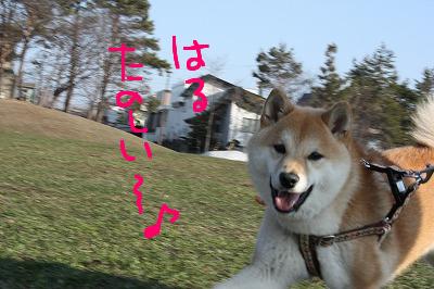 コピー ~ cIMG_5955