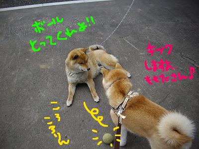 コピー ~ cはな (12)