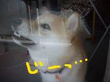 コピー ~ cはな (35)