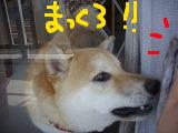 コピー ~ cはな (38)