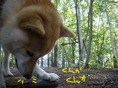cはな (7)