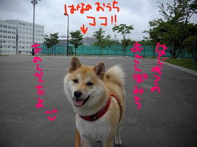cはな (53)