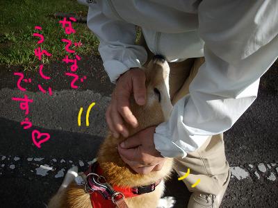 cはな (22)