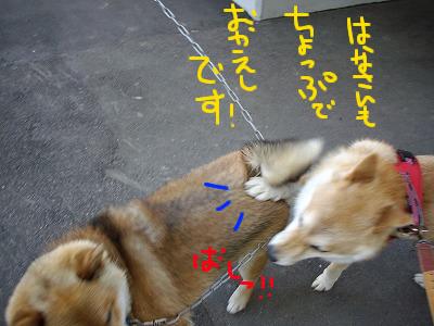 cはな (29)