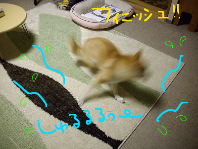 cはな (62)