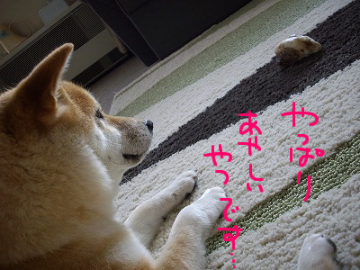cはな (51)