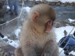 monkey_b
